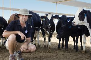 Superstition Farm - Farmer and Cows