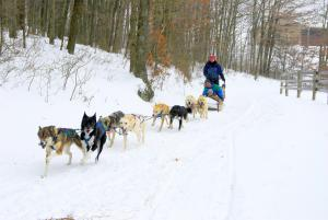 Nemacolin Dogsledding team in the snow in Laurel Highlands