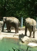 Sunny Day Adventure at Woodland Park Zoo in Seattle - Elephants