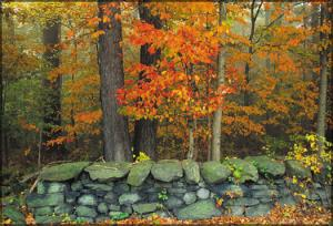 Brandywine Creek Stone Fence