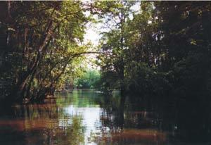 Westlake River 2