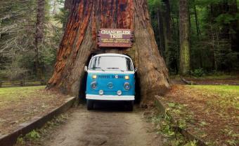 Drive Thru Tree