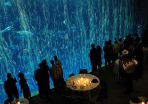 Open Sea Gallery