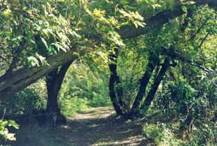West_Souris_River_Conservation_District_-_Canupawakpa_Trail.jpg