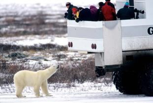 Great White Bear Tours Inc.