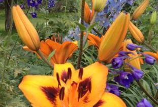 Beausejour_Daylily_Gardens.jpg