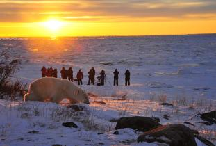 Guests watch a polar bear on a Churchill Wild Safari - Ian Johnson