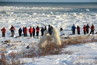 Polar Bear Photo Safari - Bill Lyne
