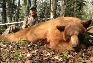 Agassiz Outfitter, black bear hunting 2