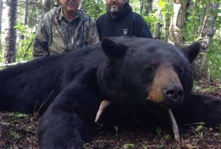 Agassiz Outfitter, black bear hunting 3