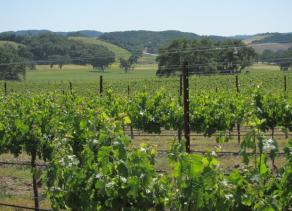 Vineyard & Art