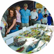 Copy of Seafood-Festival-Event