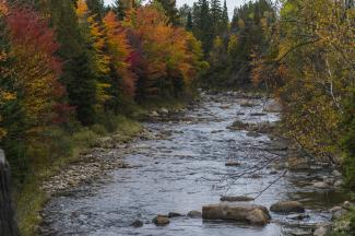 Fall foliage along river