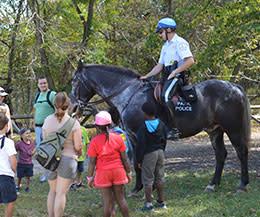 Great Falls: Horse