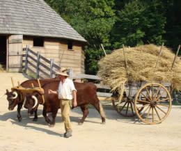 Mount Vernon: Meet the animals