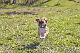 Cooper at dog park