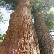The Pine Hollow Arboretum