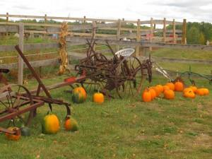 Fruit Ridge Hayrides in Grand Rapids