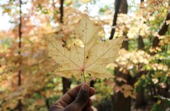 Hayden Falls Fall Leaf