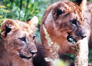 Oklahoma City Zoo & Botanical Gardens