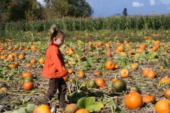 Pumpkin Patch Picking at Northern Lights Christmas Tree Farm