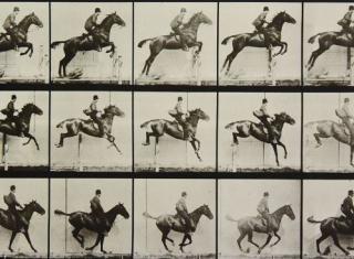 NSLM- horse and camera