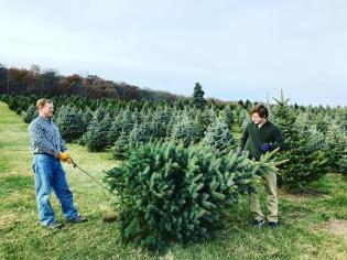 Snicker's Gap Christmas Tree Farm