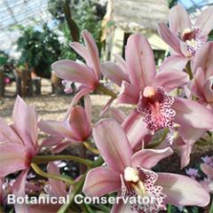 Botanical Conservatory Flowers