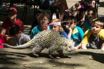 Brandywine Zoo, Wilmington, Delaware