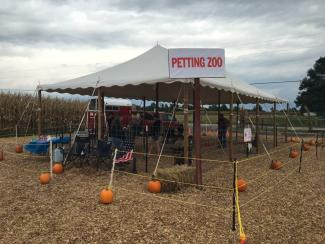 The whole family will enjoy the petting zoo at Hogan Farms.