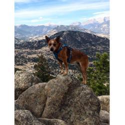 Hike Dog 2