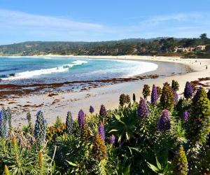 """Morning on Carmel Beach"" photo taken by Judy & Paul"