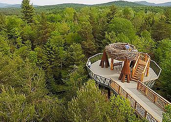 Wild Walk - Photo Courtesy of Wild Walk Center