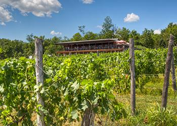 Robibero Family Vineyards Photo by Courtesy of John Fischer Photography