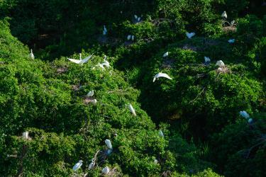 Birding Fort Delaware