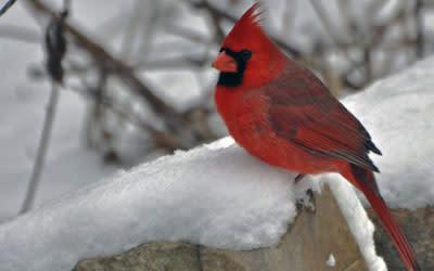 Indiana Dunes State Park Birding