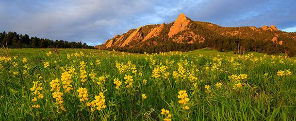 Flatirons with Yellow Flowers