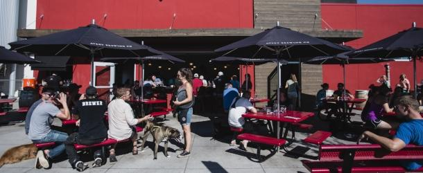 Patrons and pets dining on the patio at Avery Brewing