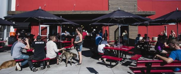 Patrons and dogs at Avery Brewing Patio