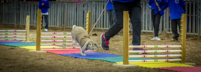 Rabbit Hopping at the Pennsylvania Farm Show