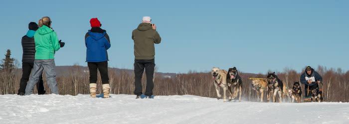 Open North American Sled Dog Race - Fairbanks Alaska
