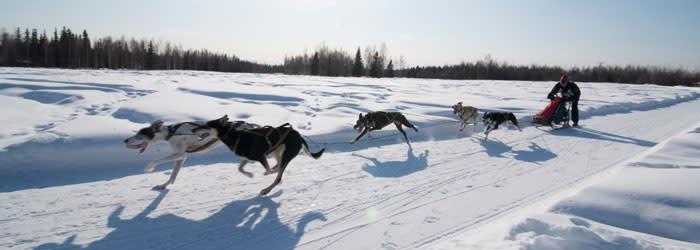 https://www.explorefairbanks.com/things-to-do/activities-attractions-and-tours/winter-activities/