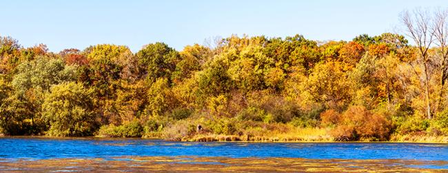 View of river and tree with autumn-colored leaves at Rock Cut State Park