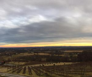 Bluemont Vineyards