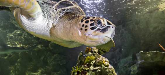 Sealife Sea Turtle
