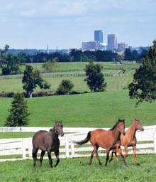 skyline-pasture