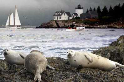 Educational Eco wildlife cruise