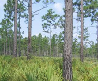 Wiregrass Prairie Preserve