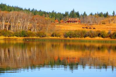 Fall colors, horses and ranch