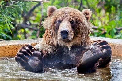 Knute - Grizzly Bear